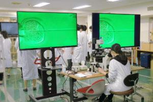 臨床検査学科 顕微授精実習を行いました!!
